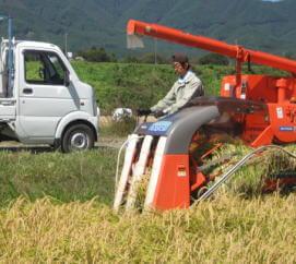 信州トマト工房のお米作り